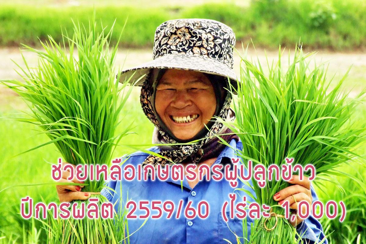โครงการสนับสนุนเงินช่วยเหลือต้นทุนการผลิตให้แก่เกษตรกรผู้ปลูกข้าว ปีการผลิต 2559/60 (ไร่ละ1,000)